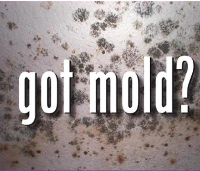 Mold Remediation Confused About Mold - Leave It to the Professionals