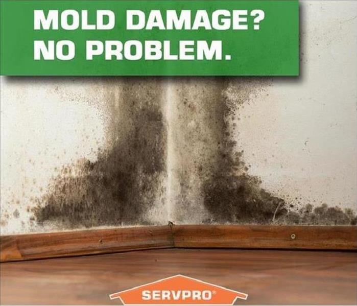 Mold Remediation From the Ordinary to the Unhealthy